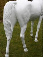 Foto 2 Lebensgrosses Pferd Rohling Araber Hengst