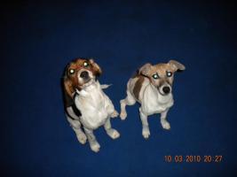 Foto 2 Leider müssen wir unsere Hunde verkaufen
