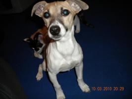 Foto 3 Leider müssen wir unsere Hunde verkaufen