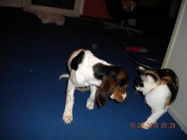 Foto 4 Leider müssen wir unsere Hunde verkaufen