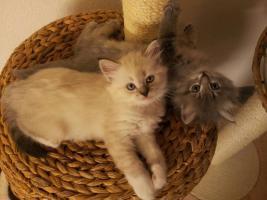 Liebe Katzenzüchter und Katzenliebhaber
