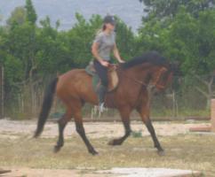 Foto 4 Lieber 7 jährige andalusier