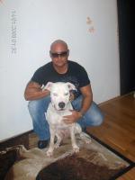 Foto 2 Lieber Dogo Argentino Hund