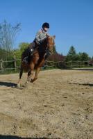 Foto 2 Liebes Reitbeteiligungspferd