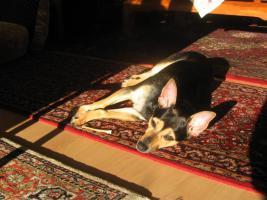Liebevolle Hundebetreuung bei uns Zuhause