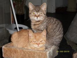 Foto 3 Liebevolle Katzenkinder
