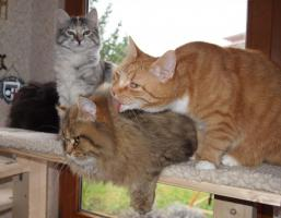 Liebevolle Tierbetreuung