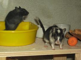 Foto 4 Liebevolle Tierbetreuung