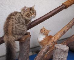 Foto 7 Liebevolle Tierbetreuung