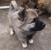 Foto 9 Liebevolle Tierbetreuung