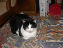 Foto 2 Liebevolle Tierbetreuung