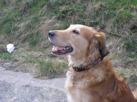 Liebevolle Urlaubsbetreuung für unseren Hund