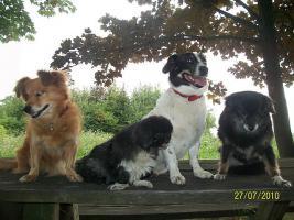 Foto 2 Liebevolles Hundesitting