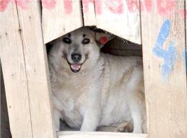 Foto 2 Lorena (ca 2005 geb.)
