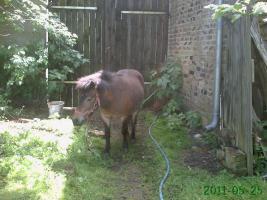 Luna - Pony-Stute sucht neues zu Hause