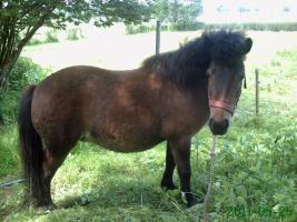 Foto 5 Luna - Pony-Stute sucht neues zu Hause