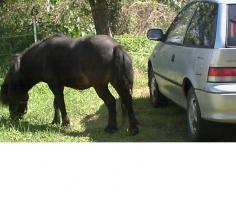 Foto 6 Luna - Pony-Stute sucht neues zu Hause
