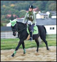 MEDINA-das Freizeitpferd für Kinder und ängstliche Reiter-toll im Gelände