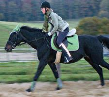 Foto 2 MEDINA-das Freizeitpferd für Kinder und ängstliche Reiter-toll im Gelände