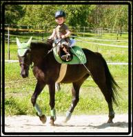 Foto 4 MEDINA-das Freizeitpferd für Kinder und ängstliche Reiter-toll im Gelände