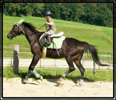 Foto 5 MEDINA-das Freizeitpferd f�r Kinder und �ngstliche Reiter-toll im Gel�nde