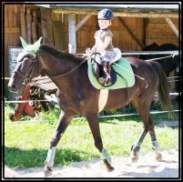 Foto 6 MEDINA-das Freizeitpferd für Kinder und ängstliche Reiter-toll im Gelände