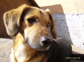 MIMI – eine Seele von Hund sucht Heimat