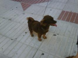 Foto 2 MISSY – unschuldig in der Tötungsstation (Tierschutzhund)