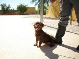 Foto 4 MISSY – unschuldig in der Tötungsstation (Tierschutzhund)
