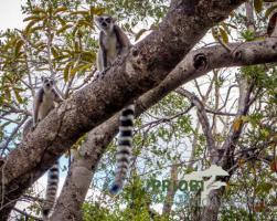 Foto 2 Madagaskar - Individualreisen und Gruppenreisen
