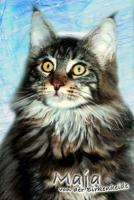 Maine Coon Joungstar