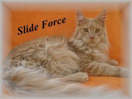 Foto 2 Maine Coon Kitten mit Staubaum