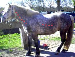 Massage und Bewegungstherapien für Pferde und Pony