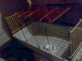 Foto 2 Meerschweinchen Käfig