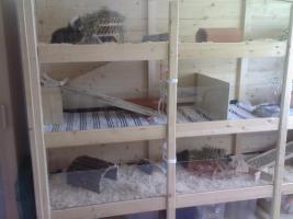 meerschweinchenstall eigenbau aus holz und glas riesengro in rosenheim von privat. Black Bedroom Furniture Sets. Home Design Ideas
