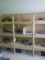 Foto 3 Meerschweinchenstall - Eigenbau aus Holz und Glas - Riesengroß