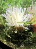 Meerwasser Aquarien und Tiere