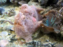 Foto 5 Meerwasser Aquarien und Tiere