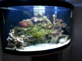 Foto 3 Meerwasserbecken nur Inhalt oder komplett Becken mit Technik