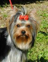 Foto 2 Mehrere Hunde einzeln an älteres Ehepaar oder an alleinstehende ältere Person zu verkaufen!