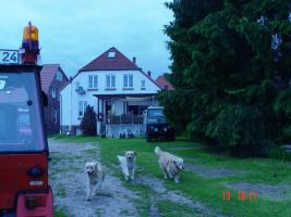 Foto 7 Mehrfamilienhaus oder großzügiges Einfamilienhaus von privat an privat ;-)
