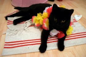 Foto 3 Meine Katze Zora sucht ein neues Zuhause!