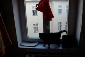 Foto 4 Meine Katze Zora sucht ein neues Zuhause!