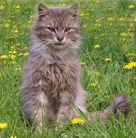 Meine Katze verdient f�r mich Geld? Was macht Deine f�r Dich?