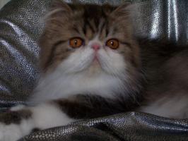 Foto 2 Miau, miau, schnurr schnurr