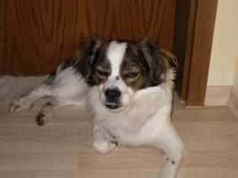 Foto 3 Michlingshund