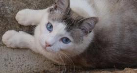 Foto 2 Miezi - eine wahre Katzengeschichte