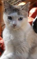 Foto 3 Miezi - eine wahre Katzengeschichte