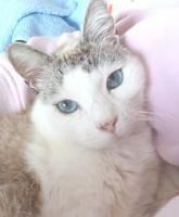 Foto 4 Miezi - eine wahre Katzengeschichte