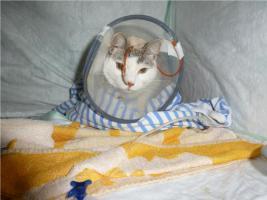 Foto 5 Miezi - eine wahre Katzengeschichte
